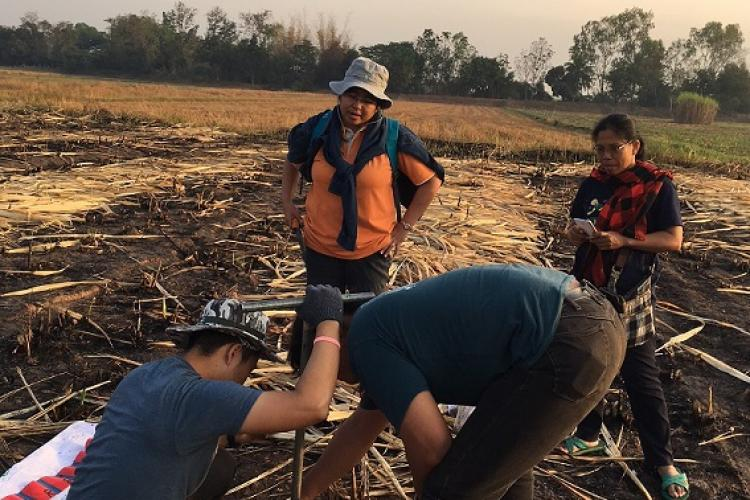 Researchers examine a field in Thailand.