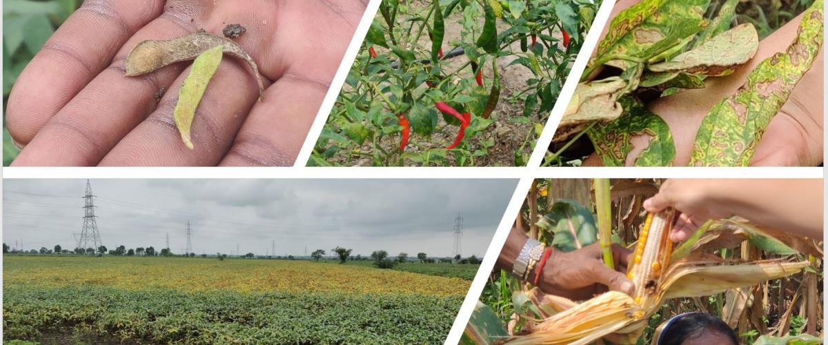 Crops collage