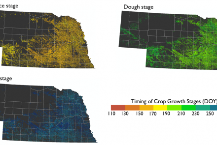 Figure 1. Estimated crop growth stages in Corn for 2015 in Nebraska