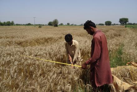 Farmers analyzing crops in field